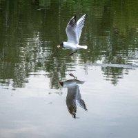 Просто чайка) :: Елена Сливка