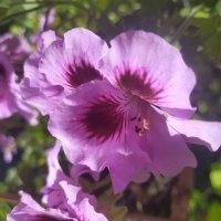Цветок :: Artem Ефимец
