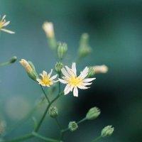Цветёт цветок :: Сергей Беляев