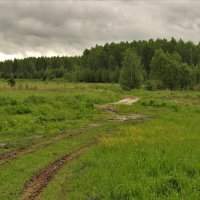 Дорога в лес :: Лидия Серг