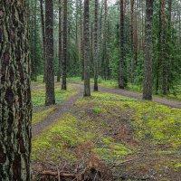 В лесу после дождя. :: Михаил (Skipper A.M.)