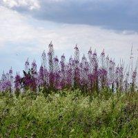 Цветочный Луг, Пчелиное Пастбище :: Heinz Thorns