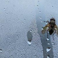 макруха в моей вотчине Ромашково...после дождя :: Юрий Яньков
