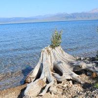 озеро хубсугул :: lyalla k