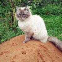 Кошка на горке :: Юрий Пучков