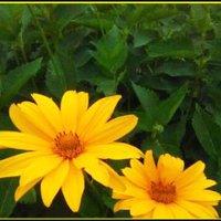 Маленькое солнце :: IRIHA Ageychik