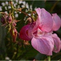 Загадочный цветок. :: aWa