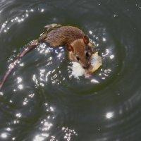 Из серии водоплавающие :: олег свирский