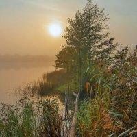 утренний туман :: Александр Евдокимчик