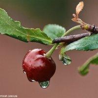 После дождя... :: Дмитрий Сиялов