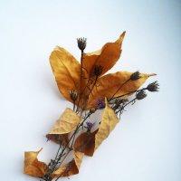 листок осени :: Вера