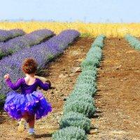 Вдоль фиолетовых ковров.. :: Гала