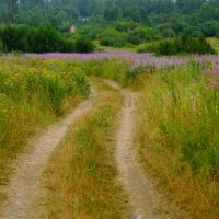Деревенские пейзажи... :: Анна Суханова