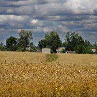 Пшеничная деревня :: M Marikfoto
