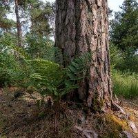 Лесной этюд :: Николай Гирш