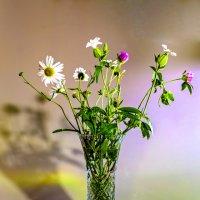 Полевые цветы :: Виктор Орехов