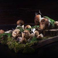 Дары леса :: Татьяна Курамшина