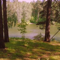 Молодые рябинки у реки. :: Мила Бовкун