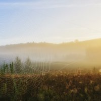 Солнечное утро :: Фёдор Куракин
