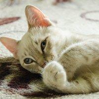 Сегодня Всемирный день кошек. А Это мой Маркиз. :: Вадим Басов