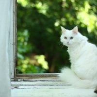 Сегодня, 8 августа, Всемирный день кошек! С днём кошек!!! :: Виталий Виницкий