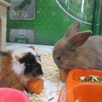 Кролик и морская свинка. :: Зинаида