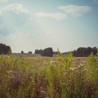 В поле :: Вадим Басов