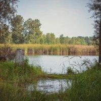 На берегу озера :: Вадим Басов