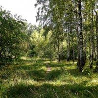 В августовском лесу :: MarinaKiseleva
