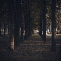 Парк :: Евгений Ломко