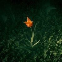 Аленький цветочек :: Елена Берсенёва