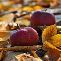 Осень с ароматом яблок... :: Любовь Р