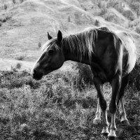 Конь рыжий :: alteragen Абанин Г.