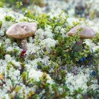 Время грибов :: Ольга