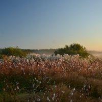 Ещё лето, но осень уже на пороге :: demyanikita