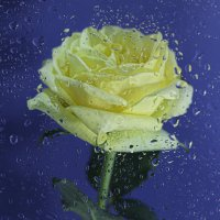 Дождь :: Irene Irene