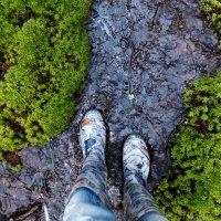 лесные тропинки :: BioJ .