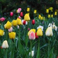 Мир солнца и весна :: Volodymyr Shapoval VIS t