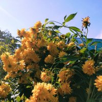 Золотой шар - любимый символ августа. :: Yulia Raspopova