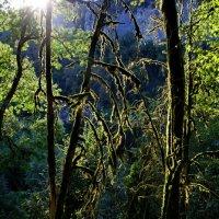 В Сочинском лесу :: Виолетта