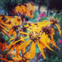Последние цветы уходящего лета.. :: Алексей Архипов