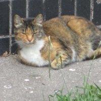 Кошка Муся,любимица наша. :: Зинаида
