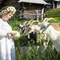 Лето в деревне :: Денис Тар