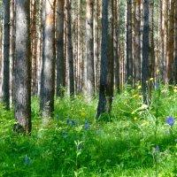 Летом в лесу :: Натала ***