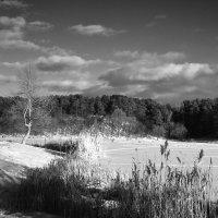 Морозный зимний день. :: Андрий Майковский