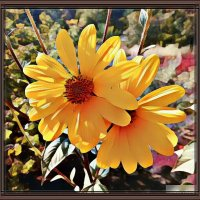Осенние цветы :: Владимир Бровко