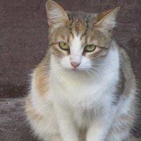 Кошка Маша. :: Зинаида