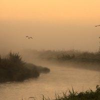 Утро у реки ..... :: Milan Bubeníček
