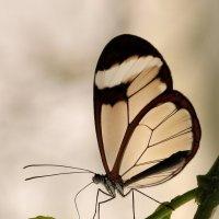 Грета Ото или стеклянная бабочка :: Bo Nik