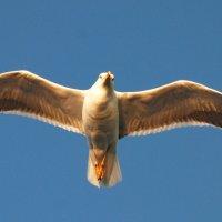 Над волною реет чайка. :: Андрей Иванович (Aivanovich-2009)